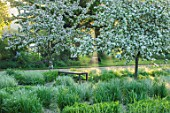 THE MANOR HOUSE, STEVINGTON, BEDFORDSHIRE: WOODEN BENCH WITH CALAMAGROSTIS ACUTIFLORA OVERDAM IN SPRING. BLOSSOM, WHITE, FLOWERS, PETALS