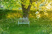 THE MANOR HOUSE, STEVINGTON, BEDFORDSHIRE: WHTE METAL BENCH, SEAT, LIME TREE, TILIA CORDATA, ANTHRISCUS SYLVESTRIS, WOODLAND, SEATING, SHADY, SHADE, SPRING, GRASS
