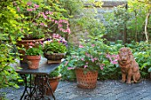 THE MANOR HOUSE, STEVINGTON, BEDFORDSHIRE: TERRACE, PATIO, TABLE, TERRACOTTA LION, CONTAINERS, DICENTRA SPECTABILIS. SPRING