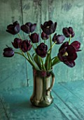 STILL LIFE VASE ARRANGEMENT OF BLACK TULIPS - TULIPA BLACK HERO, QUEEN OF NIGHT, PAUL SCHERER. ARRANGED, ARRANGEMENT