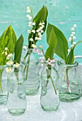 AVONDALE NURSERIES, COVENTRY: LILY-OF-THE-VALLEY - CONVALLARIA MAJALIS, VAR.ROSEA AND BORDEAUX IN GLASS BOTTLES, PETALS, FLOWERS, BULBS, LILY, OF, THE, VALLEY, SPRING, WHITE