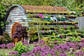 THE MOONGATE GARDEN, SUSSEX: ALLIUM FIRMAMENT, HOBBIT HOUSE, SUMMERHOUSE, SUMMER HOUSE, OUTSIDE ROOM, SHED, DEN, OFFICE, WOODEN, LIVING ROOF, POOL, POND