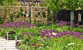 THE MOONGATE GARDEN, SUSSEX: BORDERS IN SPRING OF ALLIUM FIRMAMENT WITH BLACK FENCES, FENCING, BOUNDARY, BOUNDARIES, STONE, WALLS