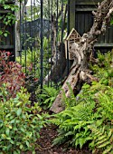 THE MOONGATE GARDEN, SUSSEX: BLACK FENCE, FENCING, BOUNDARY, BOUNDARIES,  GREEN FERNS, TREE TRUNK, MIRROR, SHADY, WOODLAND, SHADE