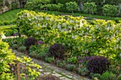 CHILWORTH MANOR, SUSSEX: THE WALLED GARDEN. PATH, WHITE WISTERIA AVENUE