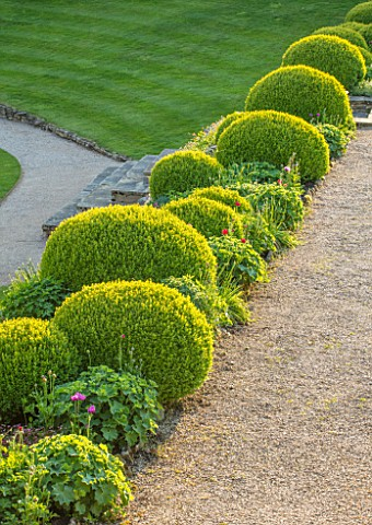 CHILWORTH_MANOR_SURREY_THE_WALLED_GARDEN_CLIPPED_TOPIARY_BOX_BUXUS_BESIDE_GRAVEL_PATH