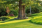 CHILWORTH MANOR, SUSSEX: LAWN WITH TREE SEAT AROUND CEDAR OF LEBANON. SPRING