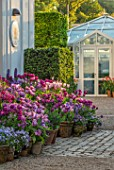 CLAUS DALBY GARDEN, DENMARK: TERRACE, PATIO, PURPLE BORDER, TULIPS IN TERRACOTTA CONTAINERS: TULIPA BLUE DIAMOND, MYSTERIOUS PARROT, CANDY PRINCE, SAIGON, PASSIONALE, LUPINS