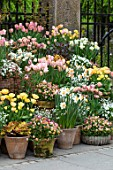 CLAUS DALBY GARDEN, DENMARK: TERRACOTTA CONTAINERS, TULIPS, DAFFODILS. TULIPA APRICOT BEAUTY, ORANGE ROSALIE, LA BELLE EPOQUE, STUNNING APRICOT, SALMON PRINCE
