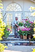 CLAUS DALBY GARDEN, DENMARK: CLAUS ARRANGING TERRACOTTA CONTAINERS OF TULIPS BESIDE THE CONSERVATORY, GREENHOUSE