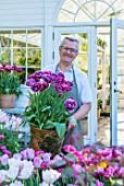 CLAUS DALBY GARDEN, DENMARK: CLAUS DALBY HIOLDING TERRACOTTA CONTAINER OF TULIPS - TULIPA DREAM TOUCH - BESIDE THE CONSERVATORY, GREENHOUSE