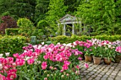 CLAUS DALBY GARDEN, DENMARK: TEMPLE, LOGGIA, GARDEN BUILDING, HEDGES, HEDGING, PINK TULIPS, TERRACOTTA CONTAINERS - TULIP DREAM TOUCH, SANTANDER, DOUBLE SUGAR, FINOLA, GRACE KELLY