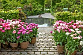 CLAUS DALBY GARDEN, DENMARK: PATIO, CIRCULAR POOL, HEDGES, HEDGING, PINK TULIPS, TERRACOTTA CONTAINERS - TULIP DREAM TOUCH, SANTANDER, DOUBLE SUGAR, FINOLA, GRACE KELLY