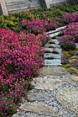 SEASIDE GARDEN DESIGNED BY ANTHONY PAUL: OAK FENCES, STONE, GRAVEL , PATH, THRIFT, ARMERIA MARITIMA, PINK, FLOWERS, COASTAL, GARDENS