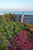 SEASIDE GARDEN DESIGNED BY ANTHONY PAUL: OAK FENCES, THRIFT, ARMERIA MARITIMA, PINK, FLOWERS, COASTAL, GARDENS, ERIGERON SEABREEZE