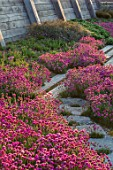 SEASIDE GARDEN DESIGNED BY ANTHONY PAUL: OAK FENCES, THRIFT, ARMERIA MARITIMA, PINK, FLOWERS, COASTAL, GARDENS, STONE PATH