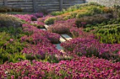 SEASIDE GARDEN DESIGNED BY ANTHONY PAUL: OAK FENCES, THRIFT, ARMERIA MARITIMA, PINK, FLOWERS, COASTAL, GARDENS