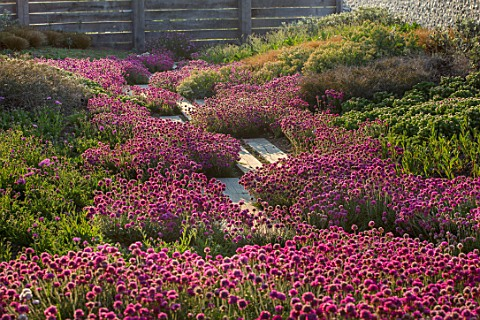 SEASIDE_GARDEN_DESIGNED_BY_ANTHONY_PAUL_OAK_FENCES_THRIFT_ARMERIA_MARITIMA_PINK_FLOWERS_COASTAL_GARD