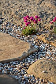 SEASIDE GARDEN DESIGNED BY ANTHONY PAUL: GRAVEL, ROCKS, THRIFT, ARMERIA MARITIMA, PINK, FLOWERS, COASTAL GARDENS