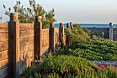 SEASIDE GARDEN DESIGNED BY ANTHONY PAUL: OAK FENCING, FENCES, ERIGERON SEABREEZE, SEA BUCKTHORN, HIPPOPHAE RHAMNOIDES, SPINK, FLOWERS, COASTAL GARDENS
