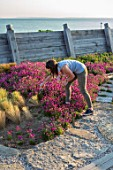 SEASIDE GARDEN DESIGNED BY ANTHONY PAUL: GARDENER ESTHER BURLEY CUTTING THRIFT