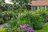 MORTON HALL, WORCESTERSHIRE: SOUTH GARDEN: PATH, LAWN, BORDER, SUMMER, IRIS GERMANICA CRISPETTE, PHLOX BILL BAKER, ROSA THE SHEPHERDESS, ROSA MARY ROSE