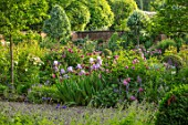 MORTON HALL, WORCESTERSHIRE: SOUTH GARDEN, SUMMER, BORDER WITH ROSES AND IRISES: ENGLISH, COUNTRY, GARDEN