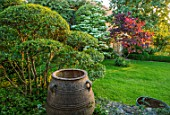 HARVARD FARM, DORSET: LAWN, TERRACOTTA CONTAINER, CLIPPED TOPIARY PHILLYREA, CORNUS KOUSA AND CERCIS CANADENSIS FOREST PANSY. GREEN, GARDENS, CLOUD, HEDGING, HEDGES