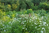HARVARD FARM, DORSET: VEGETABLE GARDEN LOOKING AWAY FROM THE HOUSE. POTAGER, KITCHEN, GARDENS, CUTTING, GREEN, WHITE, OX EYE DAISIES