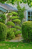 HARVARD FARM, DORSET: LAWN, BORDERS WITH CLIPPED PHILLYREA, TOPIARY SHAPES.GREEN, BORDERS, FOLIAGE,  ENGLISH, SUMMER, GARDENS, CLOUD, HEDGES, HEDGING