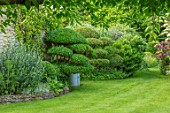 HARVARD FARM, DORSET: LAWN, BORDERS WITH CLIPPED PHILLYREA, BOX, BUXUS, TOPIARY SHAPES.GREEN, BORDERS, FOLIAGE,  ENGLISH, SUMMER, GARDENS, CLOUD, HEDGES, HEDGING