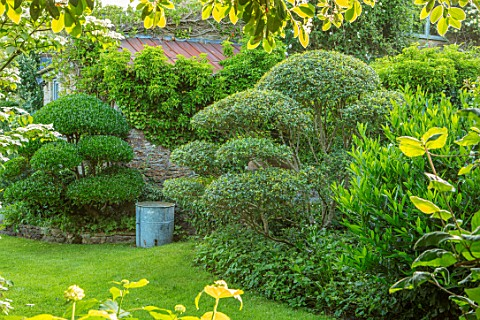 HARVARD_FARM_DORSET_LAWN_BORDERS_WITH_CLIPPED_PHILLYREA_BOX_BUXUS_TOPIARY_SHAPESGREEN_BORDERS_FOLIAG