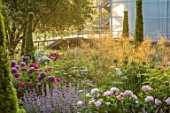 WORMSLEY, BUCKINGHAMSHIRE: THE OPERA GARDEN, DESIGNER HANNAH GARDNER: THE GARDEN IN MORNING LIGHT. SUNRISE, SUMMER. STIPA GIGANTEA, PEONIES, ALLIUM AMBASSADOR