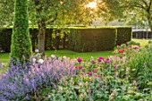 WORMSLEY, BUCKINGHAMSHIRE: THE OPERA GARDEN, DESIGNER HANNAH GARDNER: THE GARDEN IN MORNING LIGHT. SUNRISE, SUMMER. NEPETA RACEMOSA WALKERS LOW, YEW
