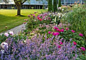 WORMSLEY, BUCKINGHAMSHIRE: THE OPERA GARDEN, DESIGNER HANNAH GARDNER: THE GARDEN IN MORNING LIGHT. SUMMER. NEPETA RACEMOSA WALKERS LOW, ASTRANTIA ROMA, PAPAVER PATTYS PLUM