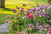 WORMSLEY, BUCKINGHAMSHIRE: THE OPERA GARDEN, DESIGNER HANNAH GARDNER: GRAVEL PATH, LAWN, ASTRANTIA ROMA, PAPAVER PATTYS. BORDERS, PINK, FLOWERS, FLOWERING