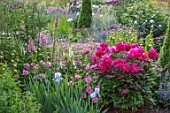 WORMSLEY, BUCKINGHAMSHIRE: THE OPERA GARDEN, DESIGNER HANNAH GARDNER: PAEONIA VICTOIRE DE LA MARNE, IRIS, DIGITALIS, BORDERS, ENGLISH, COUNTRY, GARDEN, SUMMER