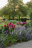 WORMSLEY, BUCKINGHAMSHIRE: THE OPERA GARDEN, DESIGNER HANNAH GARDNER: PATH, YEWS, BORDERS, PAEONIA VICTOIRE DE LA MARNE. NEPETA WALKERS LOW. ENGLISH, COUNTRY, GARDEN, SUMMER