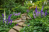 MORTON HALL, WORCESTERSHIRE: ROCKERY, FERNS, BLUE FLOWERS OF GREAT BELLFLOWER - CAMPANULA LATILOBA HIDCOTE AMETHYST AND HIGHCLIFFE VARIETY. STEPS, ROCKS, WOODLAND, WHITE FOXGLOVES
