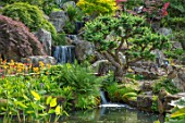 WATERFALL AND CLOUD PRUNED, CLIPPED, TOPIARY LARIX KAEMPFERI, POOL, ROCKERY, ROCKERIES, PRIMULAS, SPRING, SHRUBS, TREES. RHS GARDEN, WISLEY, SURREY