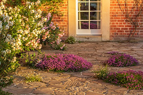MORTON_HALL_WORCESTERSHIRE_TERRACE_PATIO_ROSE__ROSA_FELICIA_CARPENTERIA_CALIFORNICA_THYME__THYMUS_SE