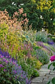 TOWN PLACE GARDEN, SUSSEX: LONG BORDER BESIDE THE LAWN - SALVIA NEMEROSA OSTFRIESLAND, SALVIA X SUPERBA SUPERBA, NEPETA WALKERS LOW, MACLEAYA CORDATA, ANTHEMIS KELWAYS