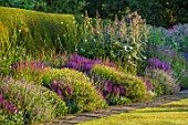 TOWN PLACE GARDEN, SUSSEX: LONG BORDER - SALVIA NEMEROSA OSTFRIESLAND, SALVIA X SUPERBA SUPERBA, NEPETA WALKERS LOW, MACLEAYA CORDATA, ANTHEMIS KELWAYS, CEPHALARIA GIGANTEA