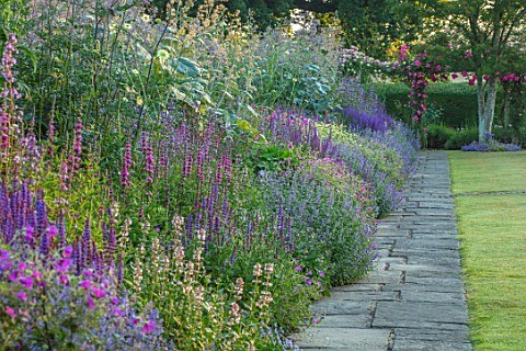 TOWN_PLACE_GARDEN_SUSSEX_LONG_BORDER__SALVIA_NEMEROSA_OSTFRIESLAND_SALVIA_X_SUPERBA_SUPERBA_NEPETA_W