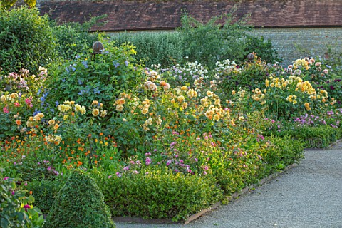 THE_WALLED_GARDEN_AT_COWDRAY_WEST_SUSSEX_ENGLISH_COUNTRY_GARDEN_BORDERS_OF_YELLOW_FLOWERED_ROSES_SUM