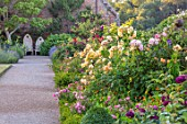 THE WALLED GARDEN AT COWDRAY, WEST SUSSEX: ENGLISH, COUNTRY, GARDEN, BORDERS OF YELLOW, RED, FLOWERED ROSES, SUMMER, BOX EDGED, BEDS, BUXUS, WOODEN THRONES, SEATS, PATHS