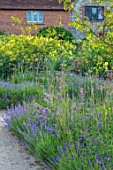 THE WALLED GARDEN AT COWDRAY, WEST SUSSEX: BORDER OF LAVENDER, VERBENA BONARIENSIS, ENGLISH, COUNTRY, GARDEN