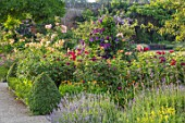 THE WALLED GARDEN AT COWDRAY, WEST SUSSEX: ENGLISH, COUNTRY, GARDEN, BORDERS OF YELLOW, RED, FLOWERED ROSES, SUMMER, BOX EDGED, BEDS, BUXUS, CLEMATIS