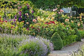 THE WALLED GARDEN AT COWDRAY, WEST SUSSEX: ENGLISH, COUNTRY, GARDEN, BORDERS OF YELLOW, RED, FLOWERED ROSES, SUMMER, BOX EDGED, BEDS, BUXUS, CLEMATIS, PATHS