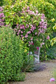 THE WALLED GARDEN AT COWDRAY, WEST SUSSEX: ROSE ARBOUR, TABLE, CHAIRS, PLACE TO SIT, AL FRESCO, DINING, ENGLISH, COUNTRY, GARDENS, SUMMER